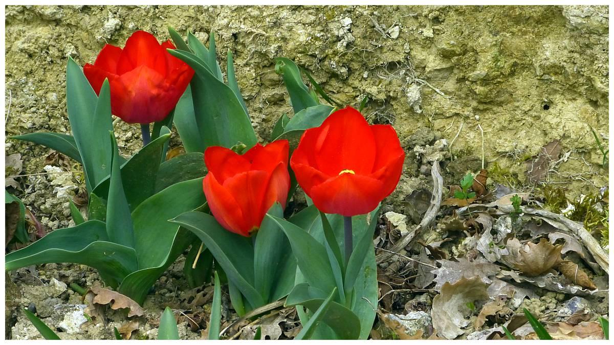 Au jardin de Marithé semaine 11/2014
