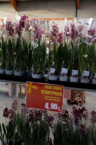 Famiflora - Promos du moment