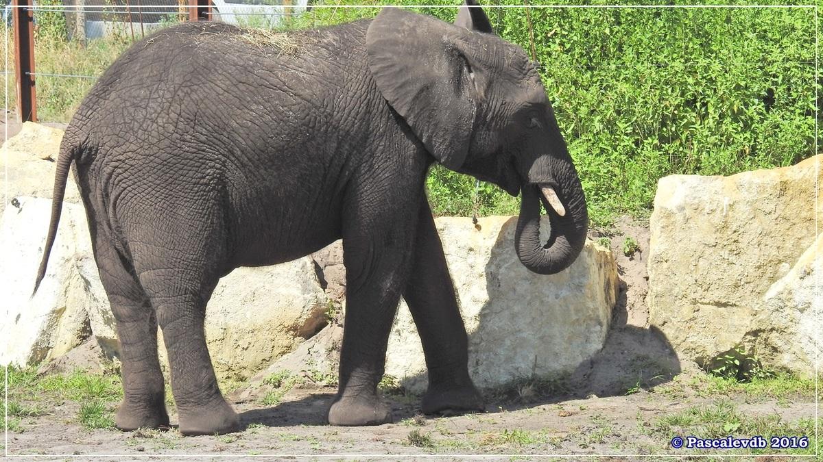 Zoo du Bassin d'Arcachon - Août 2016 - 5/15
