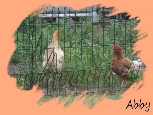 Oui ma poulette
