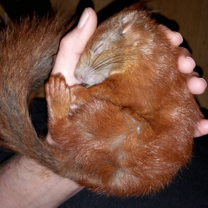 tintin-ecureuil (5)