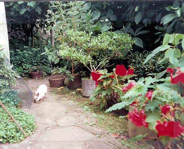 Lapin Toto au jardin - Photo Lenaïg