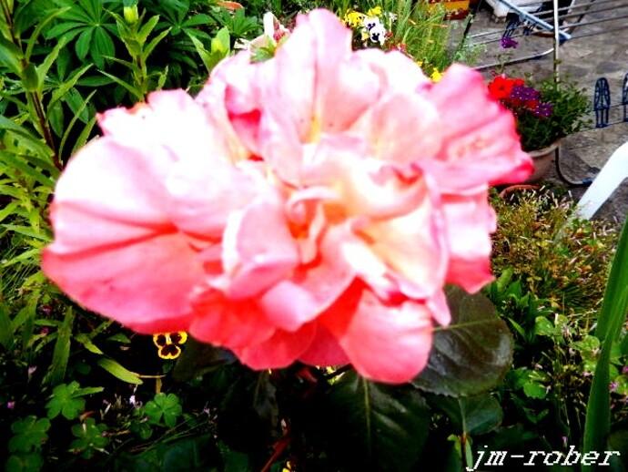 Quand la nuit libère le parfum des fleurs