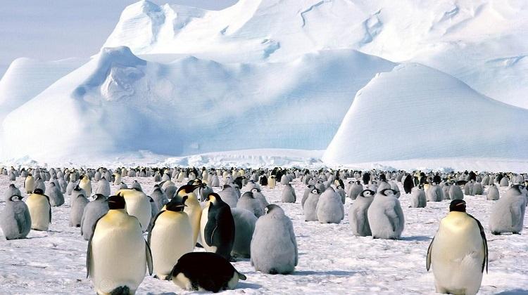 Images du monde : Près des pôles