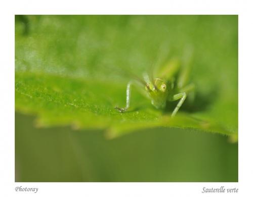 Quelques insectes