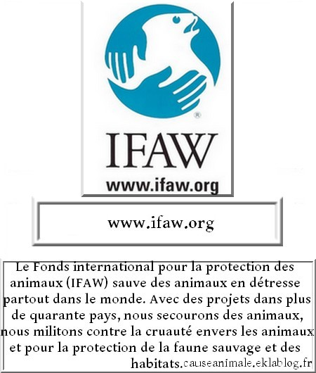 Fondations et associations