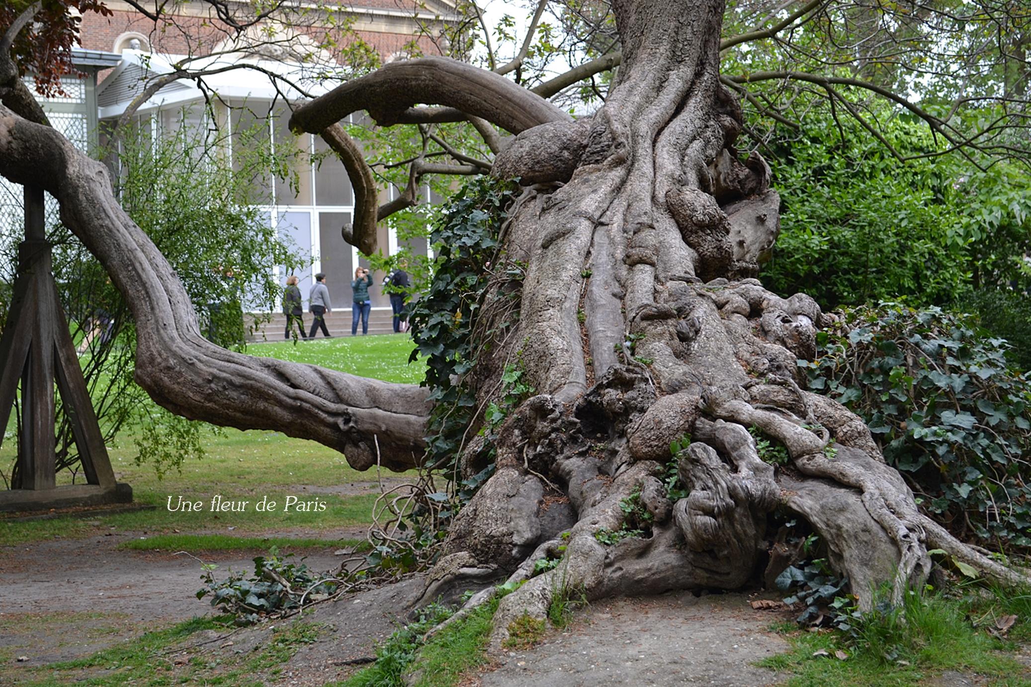 Jardin du luxembourg campagne d cennale d 39 abattage et de for Les arbres du jardin