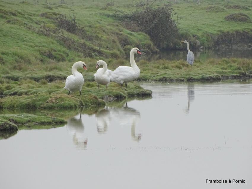 Balade dans le marais de Lyarne