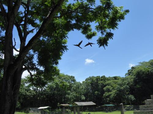 Honduras, 15ème jour, Copan Ruinas (8)