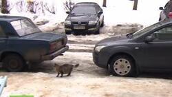 Ce chat sauve un bébé + vidéo