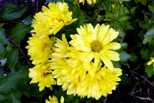 Encore des fleurs jaunes !