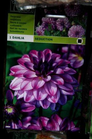 C'est le printemps à Famiflora (2/7)