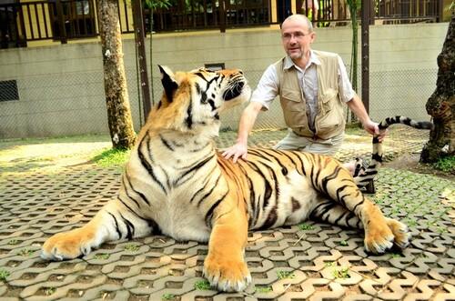 THAILANDE  Chang Mai Tigres