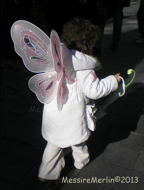 Le papillon est rare mais, j'en ai déniché un!!!