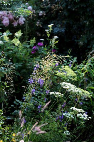 Graminées et ombellifères : incontournables pour un jardin au naturel