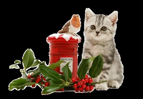 Tubes animaux Noël 9