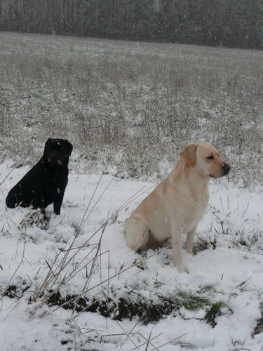pose neige