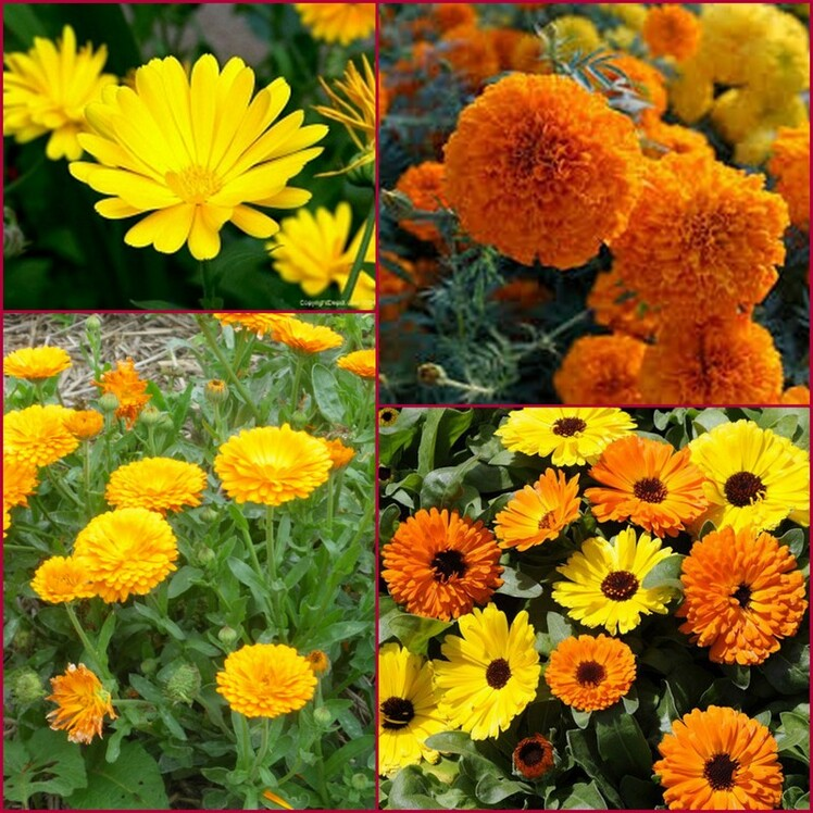 Les fleurs de naissance