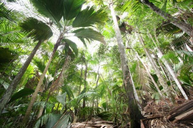 La Vallée de Mai, Seychelles
