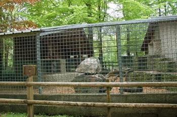 Parc animalier Bouillon 2013 enclos 239
