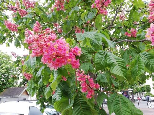 Petites fleurs dans le jardin de maman