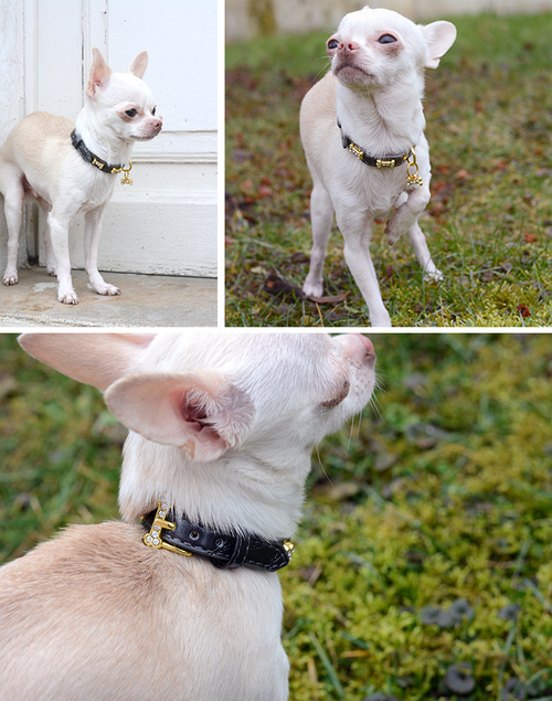 Collier pour chien Made in dog - test Howard le chichi blog
