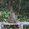singes sauvages à Kamikôchi