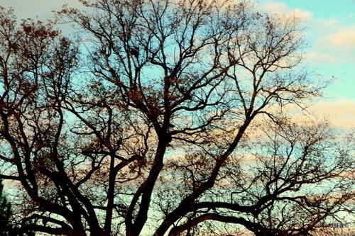 Branches d'arbre le soir