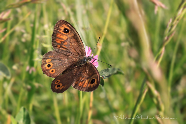Série papillons 02