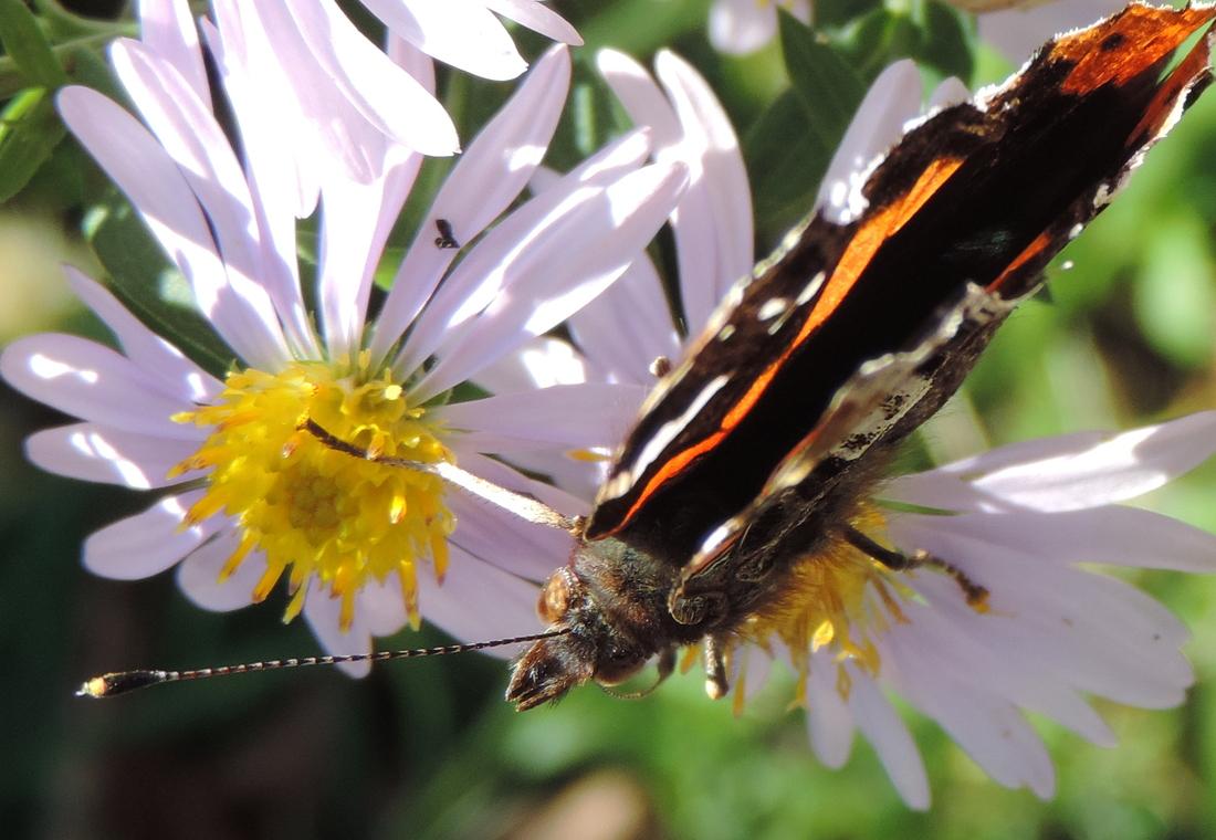 un papillon !