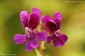 Fleurs à dominante verte et pourprée