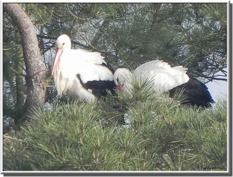 Parc ornitho du Teich - cigognes