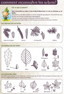 Livret forêt et bois