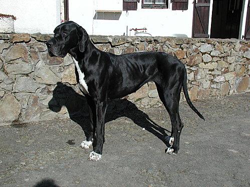 Uchka 03 2005a