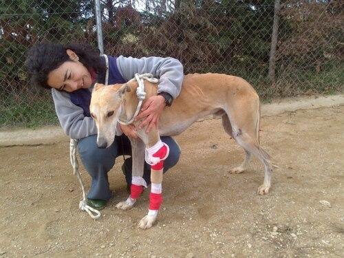 Un galga abandonné par sa famille et une petite mamie en urgence à Scooby