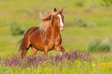 Les chevaux vous parlent à l'oreille ...