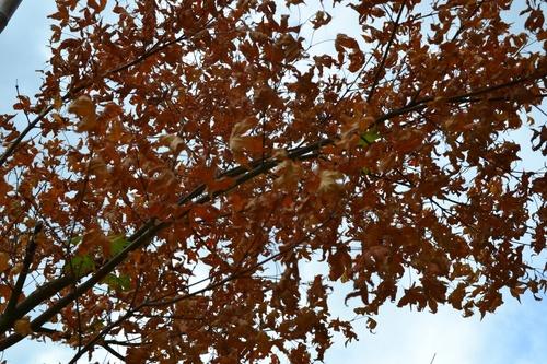 Premier jour d'automne aux arènes de Lutèce et au jardin des Plantes