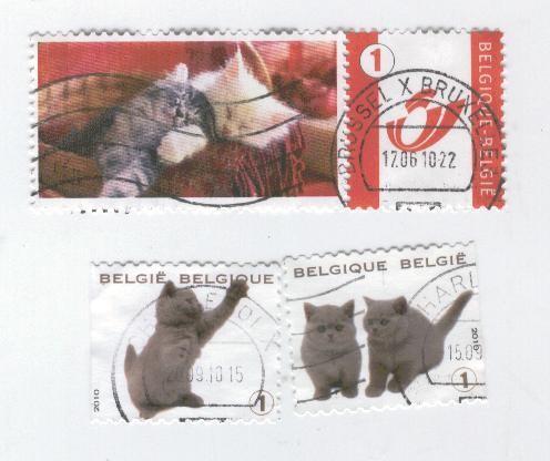 chat-Belgique.jpg