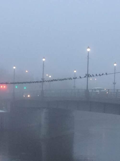 Le brouillard, les haïkus de Mona