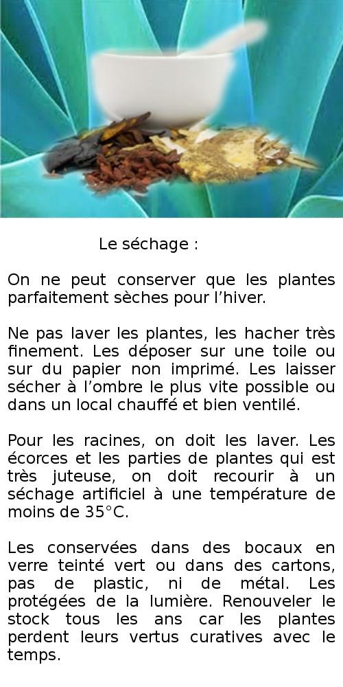 En images - Les plantes - Généralités