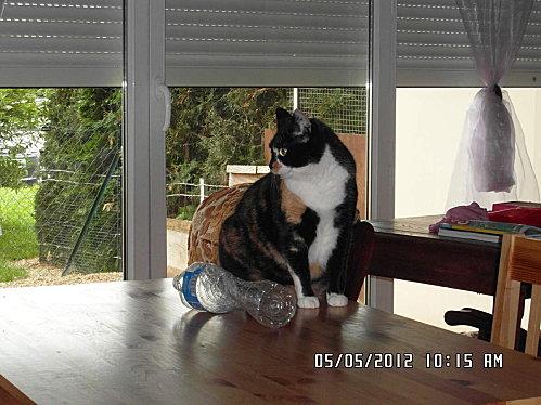 chat-pichon-et-fleurs-5-mai-009.JPG