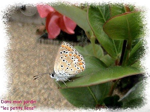 joli-papillon.jpg