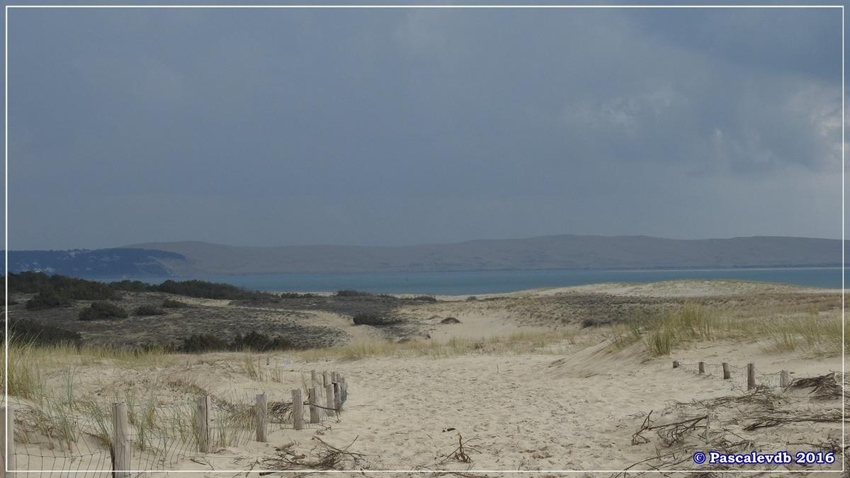 Dans les dunes à la pointe du Cap Ferret - Mars 2016 - 3/3
