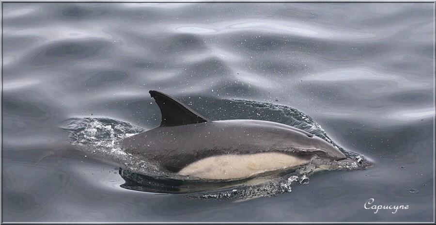 Sortie en mer : les dauphins