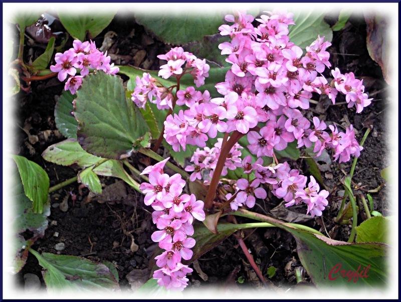 Week-end fleuri