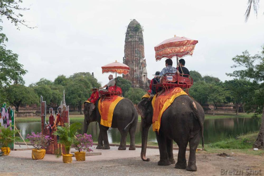 promenade elephants ayutthaya