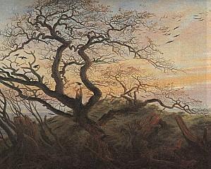 friedrich arbre