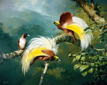 Résultats de recherche d'images pour «BIRDS-OF-PARADISE PROJECT»