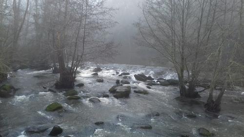Mardi - REMOUILLE dans le brouillard
