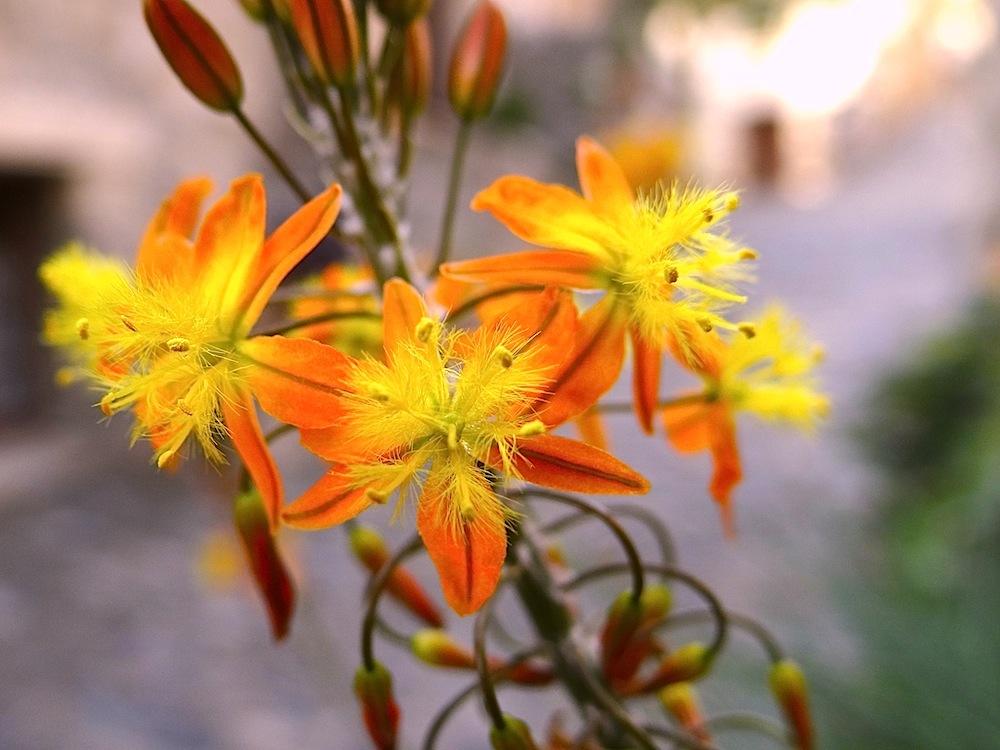 Fleurs que je  ne connais pas ... dans un village médiéval ...le cactus oui je sais ...mais pas les autres